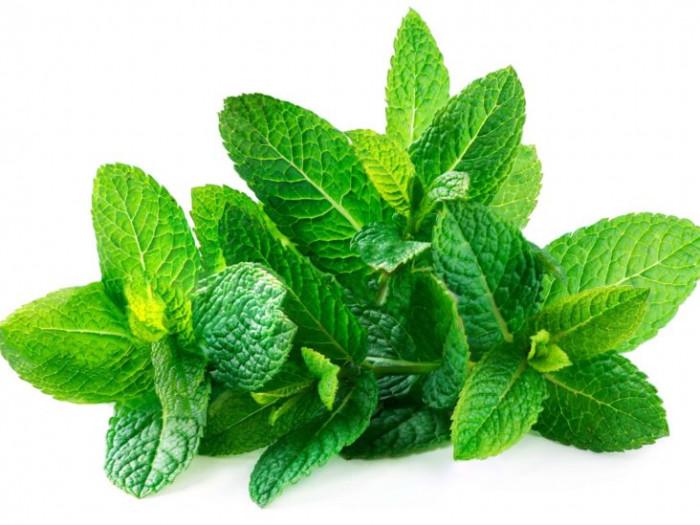 Fresh Mint leaves - পুদিনা পাতা