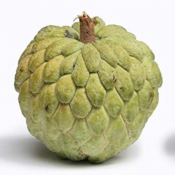 Custard Apple -  আতা