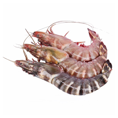 Fresh Jumbo Tiger Prawn - বাগদা চিংড়ি