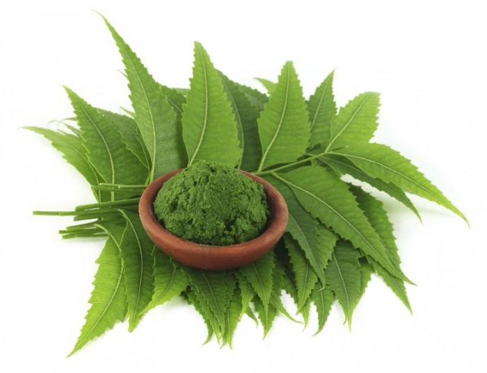 Organic Neem Leaves