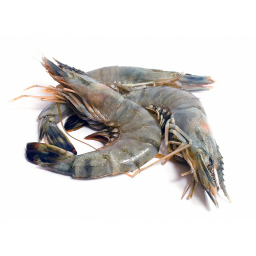 Fresh Tiger Prawn - বাগদা চিংড়ি