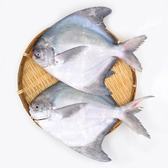 Jumbo Pomfret Fish |3 to 4 Counts|  - পমফ্রেট মাছ