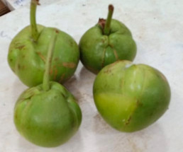 Elephant Apple - চালতা